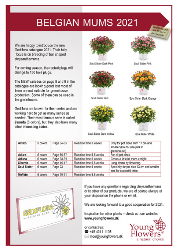 Belgian Mums 2021 - Yuong Flowers - katalog