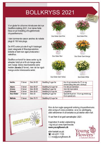 Bollkryss 2021 - Young Flowers - katalog